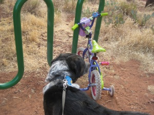 Bongo and Little Bike