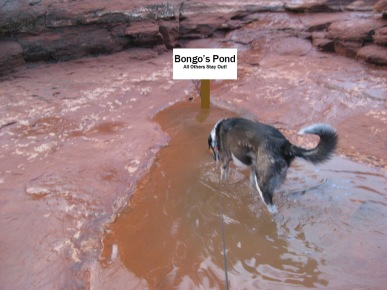 Bongo's Keep Out sign in the puddle