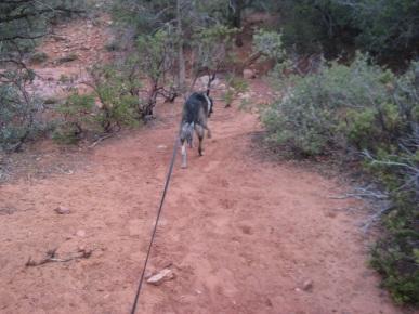 Bongo on the Less Steep Trail