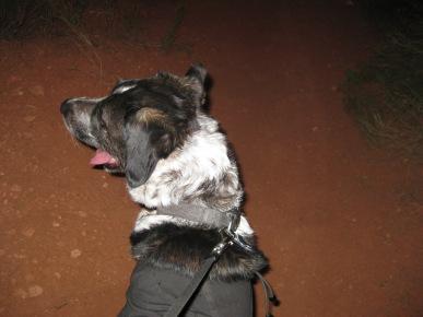 Bongo checking for thunder
