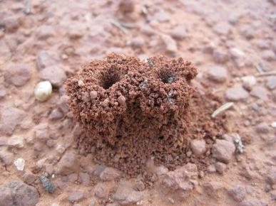 Double cylinder shaped ant hole