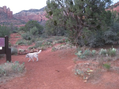 Ghost Dog on the trail