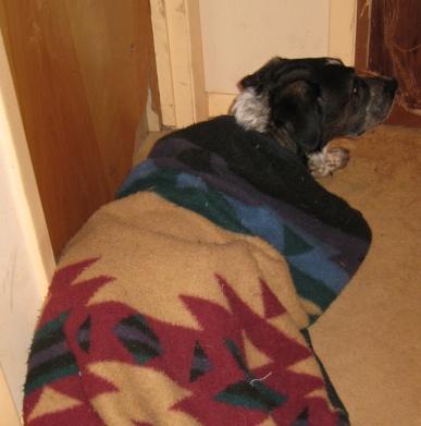 Bongo in the hall under his blanket