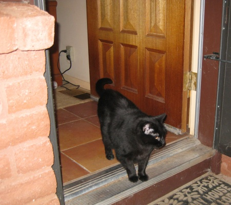 Scratchy at the open door