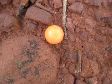 Orange Airsoft Pellet