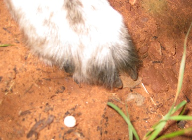 Bongo's Paw and a Dot Mushroom