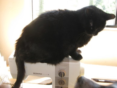 Scratchy on the sewing machine with Bongo's nose at the base