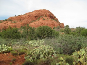 Sugarloaf and a prickly pear patch