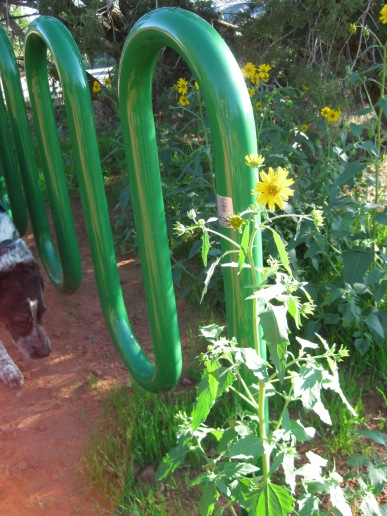 Bongo, bike rack, and sunflowers