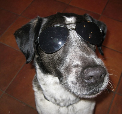 Bongo Wearing Sunglasses