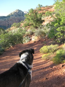 Bongo on the trail looking at blue sky