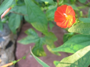 Flower on Vine