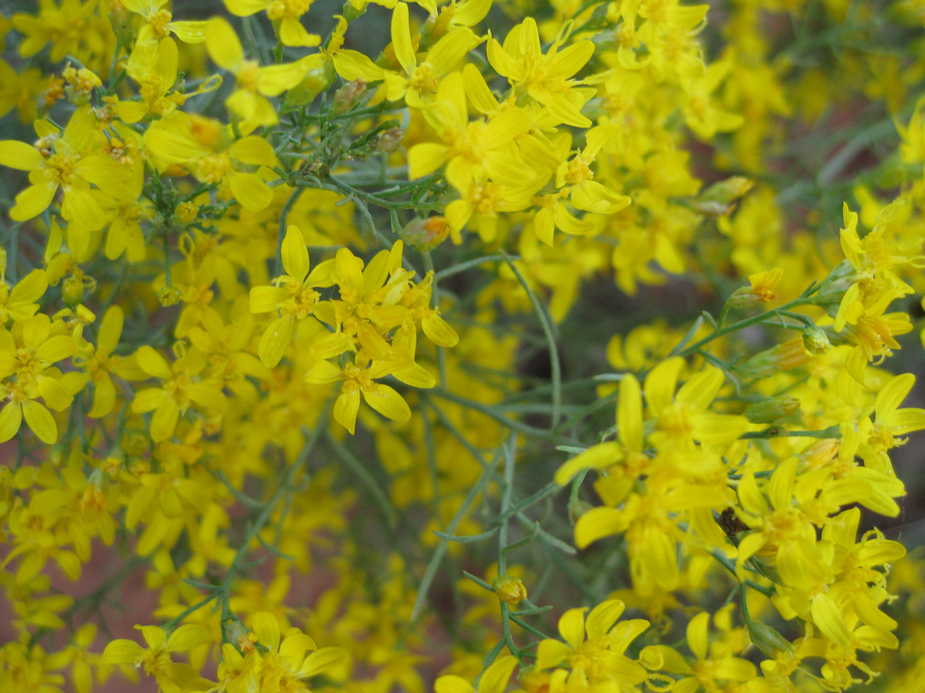 Little yellow flowers bongodogblog yellow flowers mightylinksfo