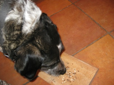 Bongo checking out dried nuts