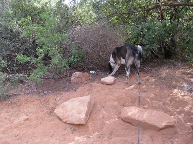 Bongo Investigating
