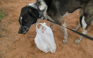 Bongo not willing to carry trash bag