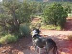 Bongo on his Trail