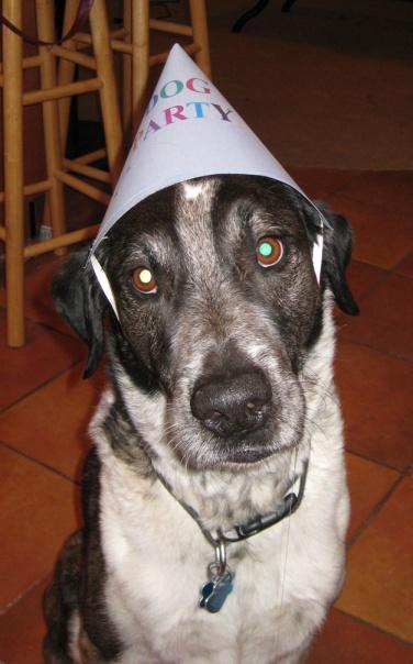 Bongo in his Party Hat