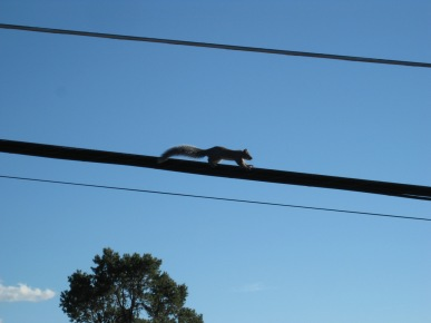 Squirrel running along the wire
