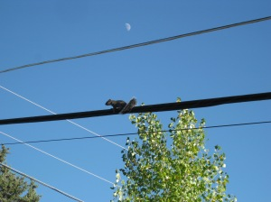 Squirrel up on a wire