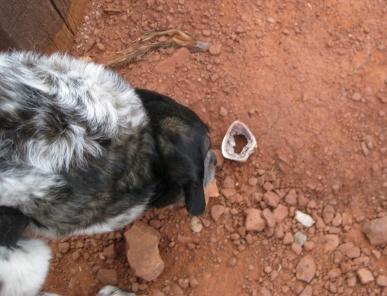 Bongo trying to get a bone