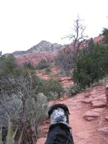 Bongo looking at gray skies while on the trail