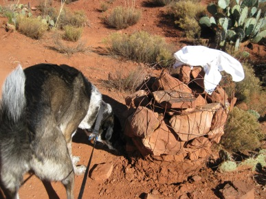 Bongo sniffing cairn with cloth on top