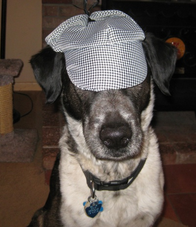 Bongo with Detective Dog hat covering his eyes
