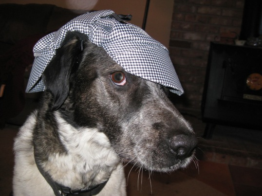 Bongo looking cool with his Detective Dog hat on