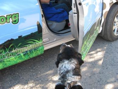 Bongo looking in the open car door