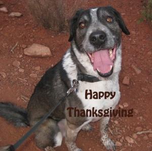 Bongo saying Happy Thanksgiving