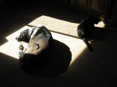 Bongo and Scratchy in the Sunny Spot