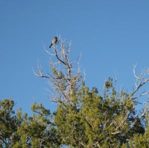 Bird on top of a tree