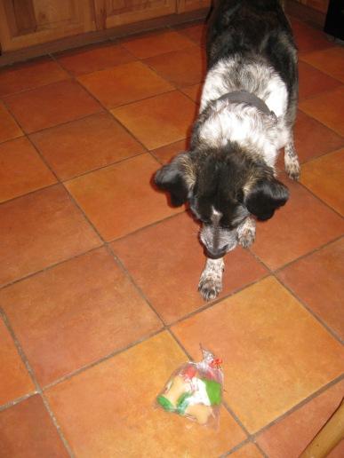 Bongo and a bag of dog cookies