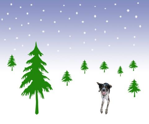 Bongo's Christmas Card