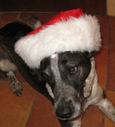 Bongo Looking Cute in a Santa Hat