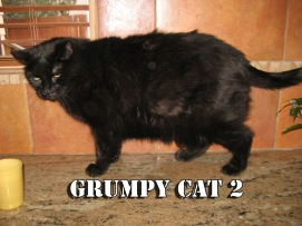 Scratchy looking like the next Grumpy Cat