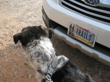 Bongo looking around the car with the TRA1LS license plate