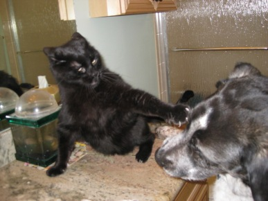 Scratchy attacking Bongo from counter