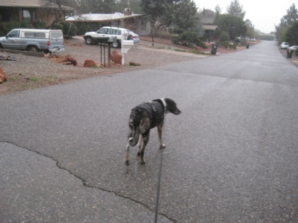 Bongo walking down the street