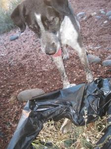 Bongo looking into a trash bag