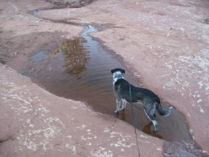 Bongo in the puddle looking at the drainage