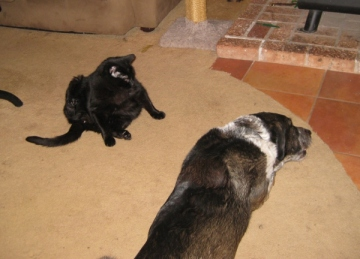 Bongo and Scratchy on the floor