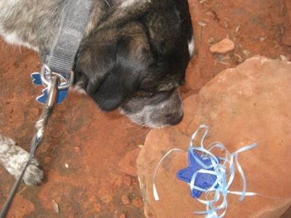Bongo looking at the star and ribbon