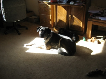 Bongo in the sunny spot with Scratchy behind him