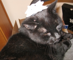 Scratchy with a white bow on his head