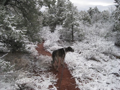 Bongo on a red trail in snow