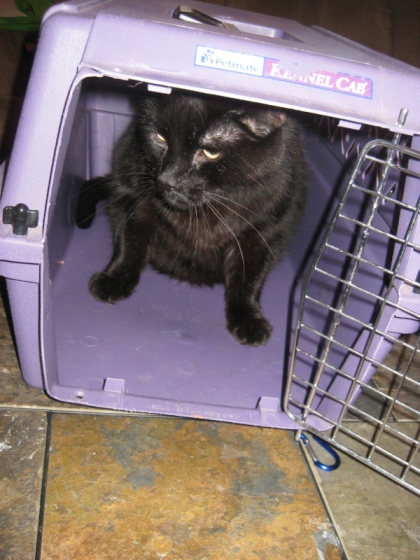Scratchy inside his cat cage