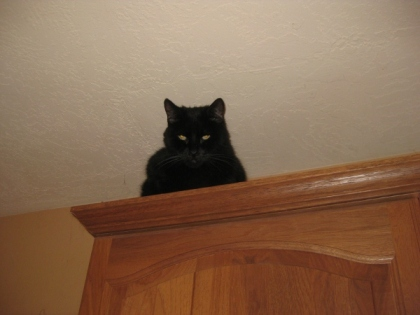 Scratchy on top of a cabinet