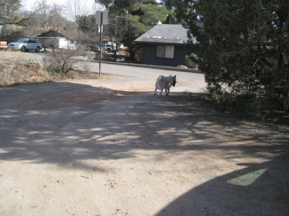 Ghost Dog leaving the parking lot